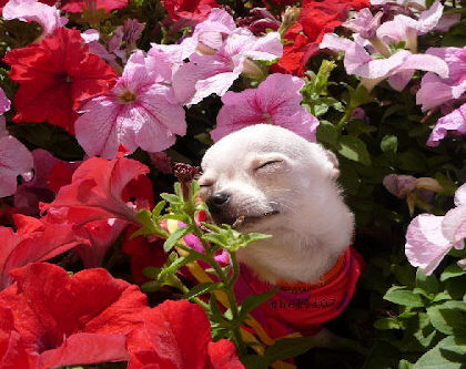 小狗享受花香