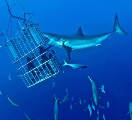 觀察鯊魚的籠子