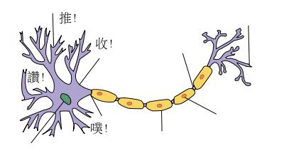神經細胞送出噗/讚/推的訊號